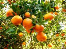 Caminhos do Frio_Matinhas_prod.tangerina_18