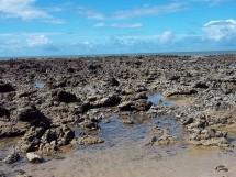 Praia de Carapibus 08