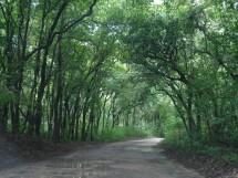Floresta Nacional da Restinga - Mata da Amém_Cabedelo_1