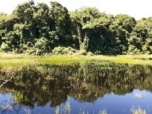 Floresta Nacional da Restinga - Mata da Amém_Cabedelo_10
