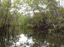 Floresta Nacional da Restinga - Mata da Amém_Cabedelo_2