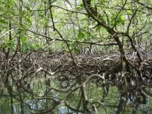 Floresta Nacional da Restinga - Mata da Amém_Cabedelo_4