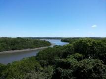 Floresta Nacional da Restinga - Mata da Amém_Cabedelo_8