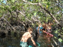 Parque Ecológico do Caranguejo-uçá 03
