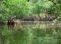 Parque Ecológico do Caranguejo-uçá 06