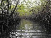 Parque Ecológico do Caranguejo-uçá 07