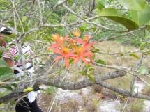 Reserva Biológica Guaribas 08