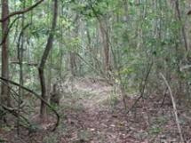 Reserva Biológica Guaribas 11