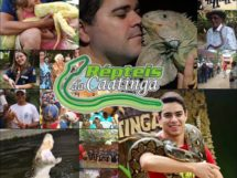 Répteis da Caatinga.07