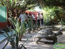 Répteis da Caatinga.09