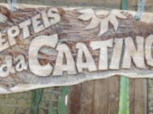 Répteis da Caatinga.15