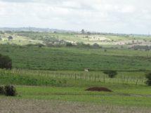 Montadas_paisagem_6