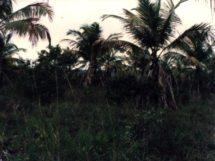 Assentamento Dona Antônia_ no início quando a terra era improdutiva_1