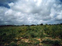 Assentamento Dona Antônia_ quando a terra era improdutiva_2