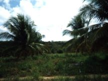 Assentamento Dona Antonia_coqueiral