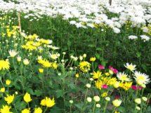 cultivo-de-flores-em-piloes_7