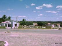 Catingueira1