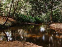 Reserva Ecológica Manjericão